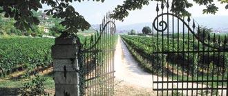 Italian Wine - Glengarry Wine